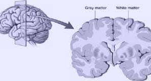 When the experts observed the gray matter of the brain by ways of which the brain performs messaging work, they come to know that people crossing 70 years of age and were habitual of exercising have that part of brain less affected than others. Besides, the gray matter was also comparatively on the high side. This is the part of brain, where the messaging function starts.