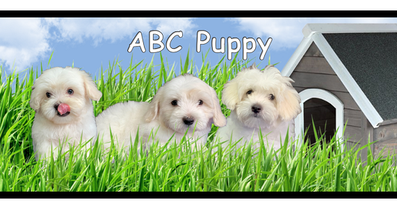 Looking for best Maltipoo puppies in New York?