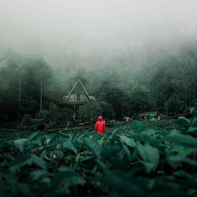 Obyek Wisata Telaga Warna Puncak Bogor
