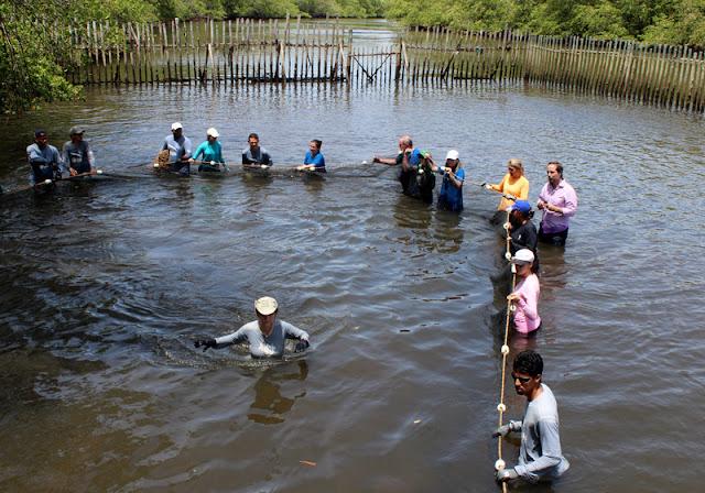 Peixe-boi é devolvido à natureza em Alagoas