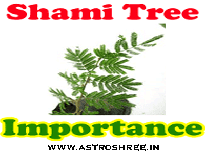shami tree importance by astrologer