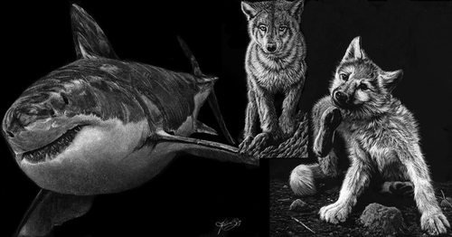 00-Allan-Ace-Adams-Scratchboard-Drawings-of-Wild-Animals-www-designstack-co