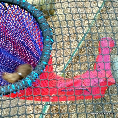 Net slide Brockhole
