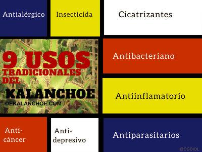 9 Usos Tradicionales del Kalanchoe, Antialégico, Anticancer, Antidepresivo