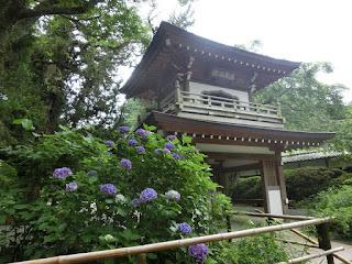 浄智寺のアジサイ