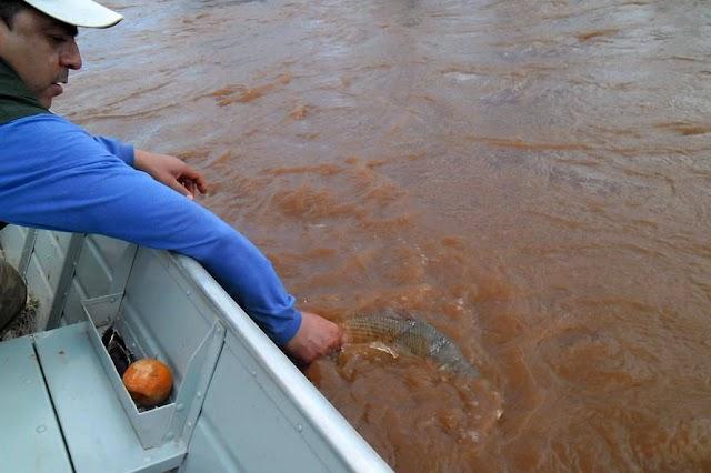 Pesca de espécies nativas está liberada a partir deste sábado
