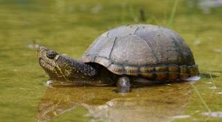 Aș fi mai curând o broască țestoasă: Poveste cu tâlc