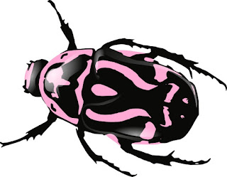 "Beetle fossil astonishes evolutionists by looking ""modern"""