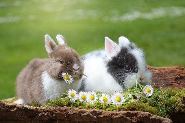 Tiny little stories for babies and kids. (Story No:1)  - Two little rabbit's story