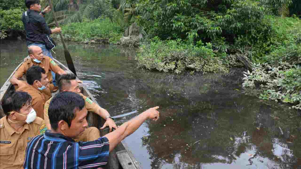 Sungai Sei Sirah Besitang Tercemar, Ribuan Ikan dan Habitat Hewan Air Lainnya Mati Mendadak
