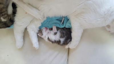 Mon chaton brestois 18%2Bmai%2B2