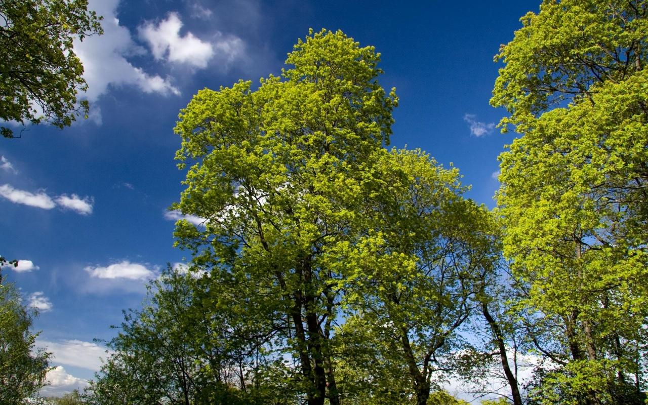 spring trees  Photo Dot Com