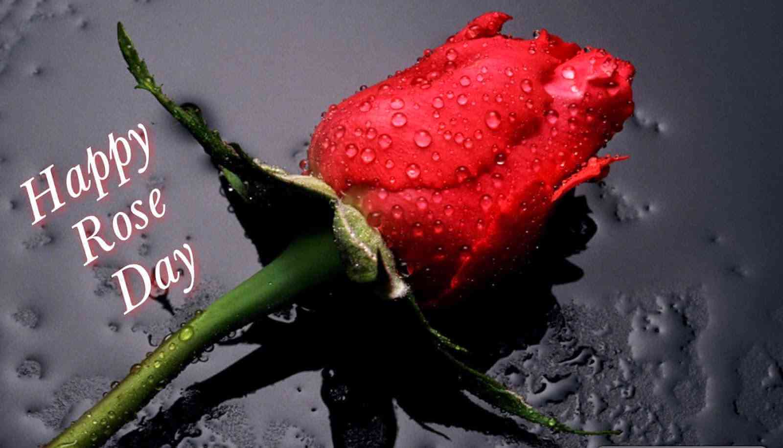 Happy Rose Day Quotes for Wife