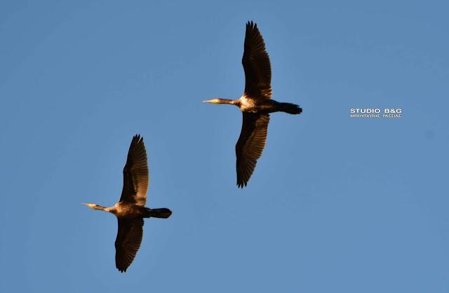 Παγκόσμια Ημέρα για τα Μεταναστευτικά Πουλιά