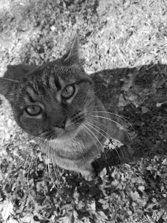 Monochrome portrait of a cat, taken by the Huawei P20 Pro's monochrome sensor