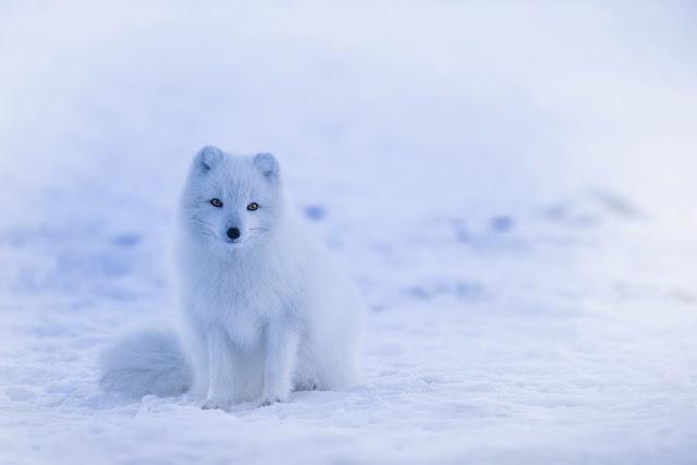 Salju: Pengertian, Bentuk, Proses Terjadinya, Keuntungan, dan Dampak dari Salju