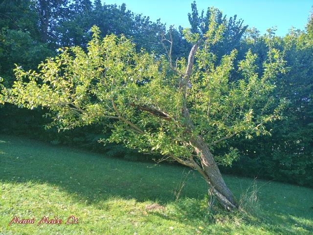 Schiefer Baum - Crooked Tree