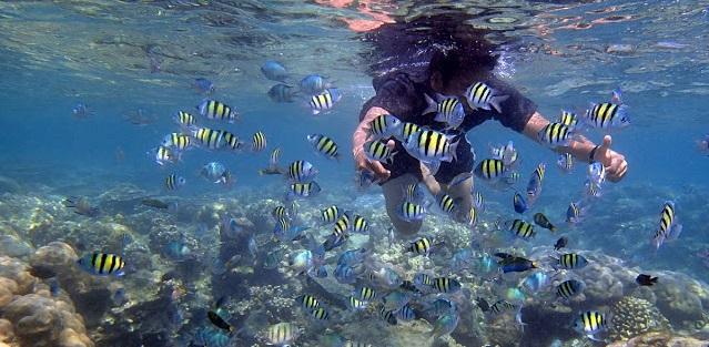 spot-snorkeling-pulau-harapan