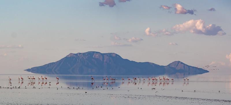 Lake Natron Flamingos