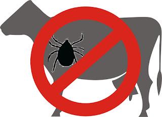 No permitas que tu ganado este infectado de garrapatas