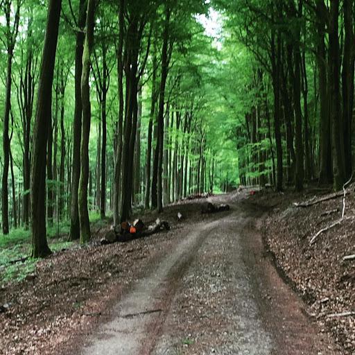 die guten Dinge Blog im Wald