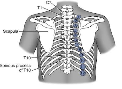 tulang rusuk di daerah dada