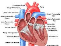 Penyakit Jantung | Ciri-ciri, Penyebab dan Cara Mengobatinya.
