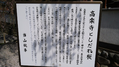 高楽寺 しだれ桜 掲示
