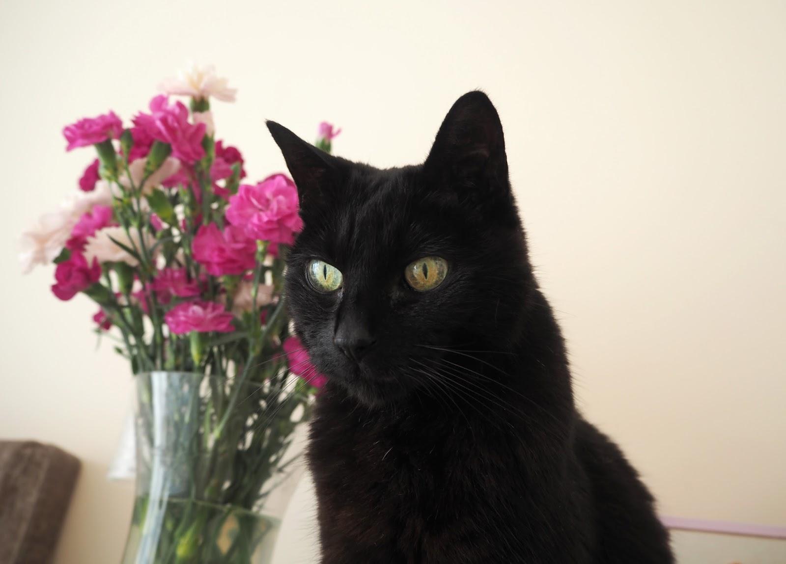 Happy 19th Birthday Mandy!, Katie Kirk Loves, UK Blogger, Lifestyle Blogger, Cat Lovers, Black Cat, I love my cat,