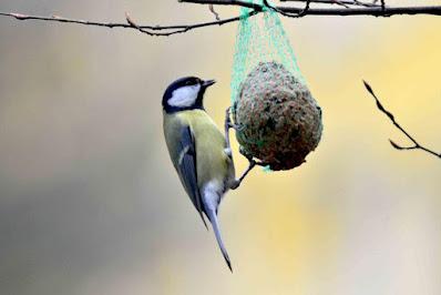تفسير حلم رؤية إطعام الطيور في المنام لابن سيرين
