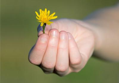 صورة ليد شخص يعطي زهرة جميلة