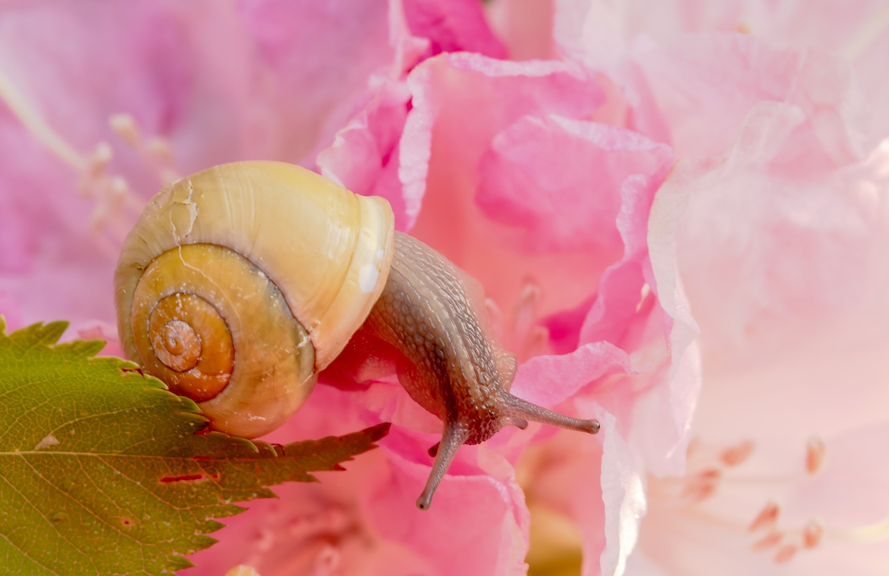 Kosmetyki ze śluzem ślimaka – HIT w pielęgnacji Azjatek