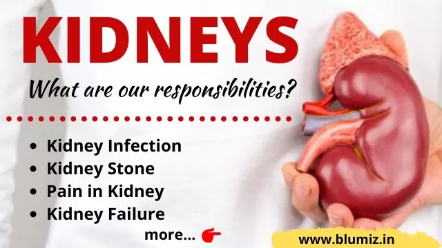 What is our Responsibilities for Kidneys
