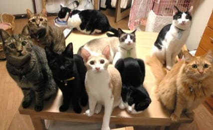 أفضل انواع قطط كيوت واشكالها