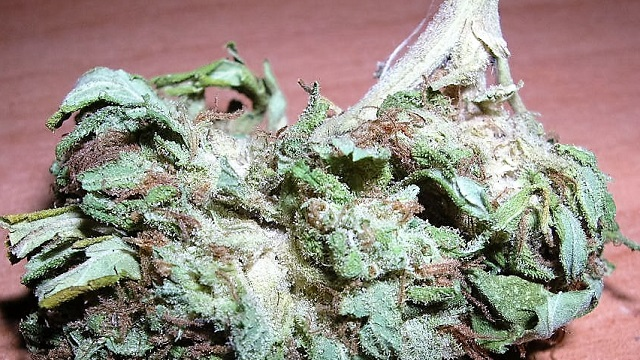 Legalisation of Medicinal Cannabis in Macedonia