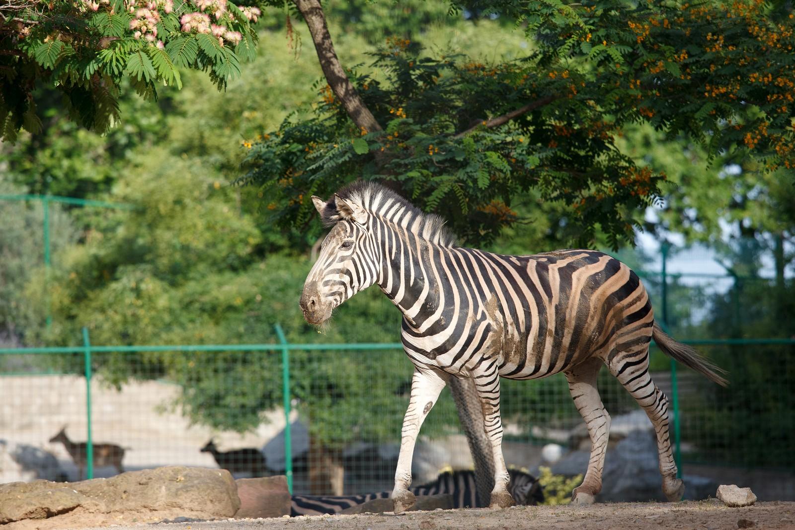Зоопарк Барселоны (Zoo de Barcelona)
