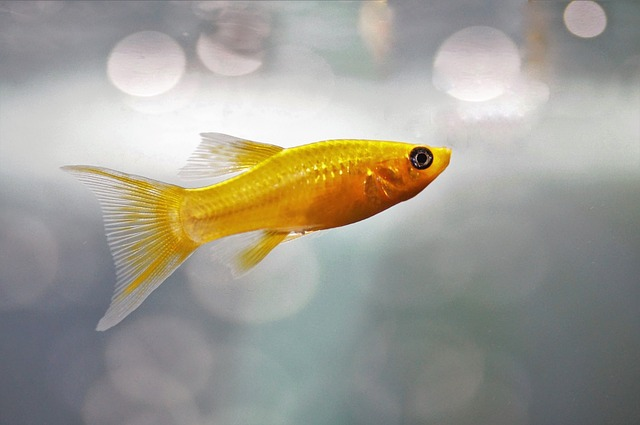 Best And Helpful Tips to Care Molly Fish In Aquarium
