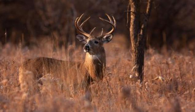 Deer Can Give You Tuberculosis: CDC