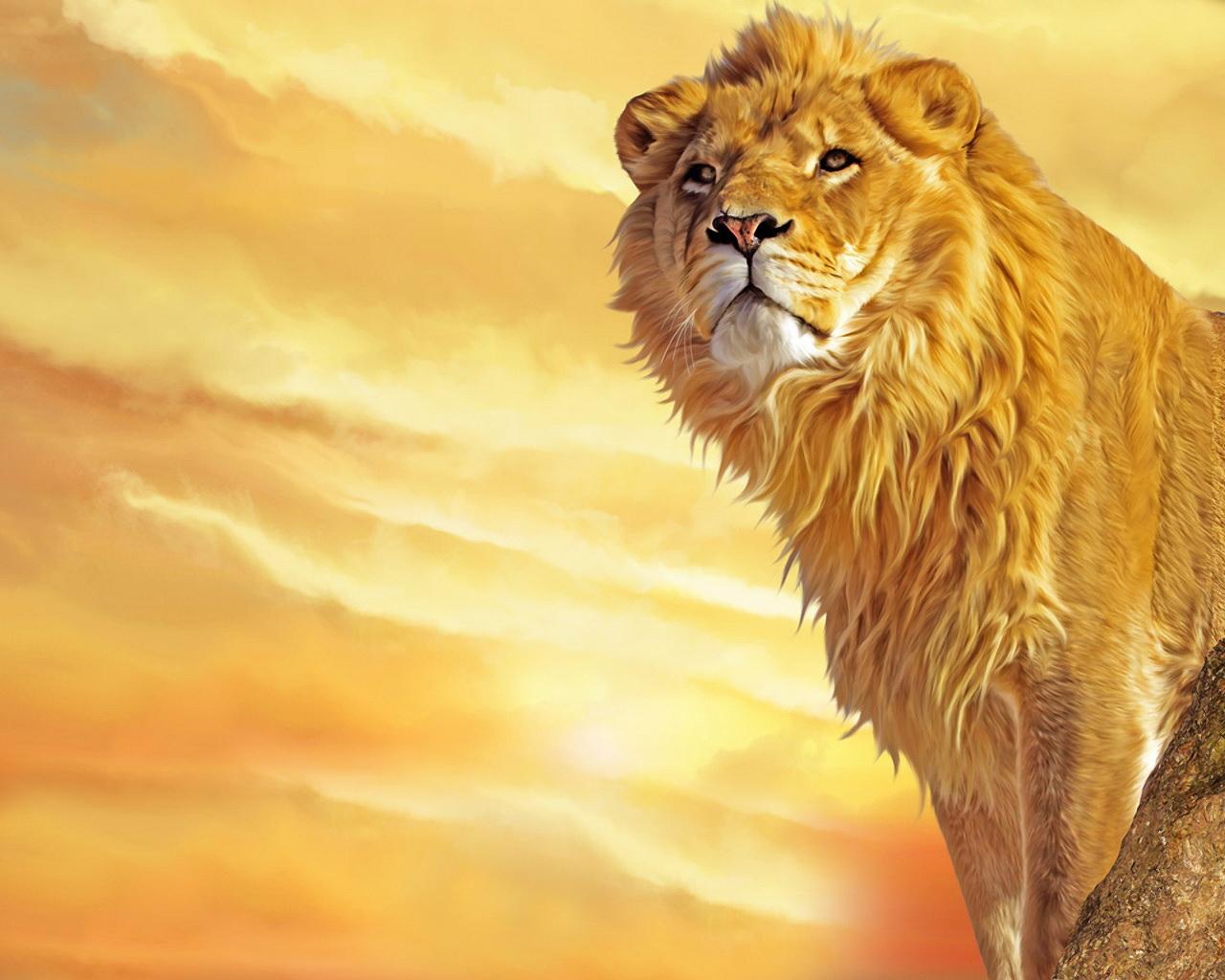 Free Download Wallpaper HD Lion Wallpapers HD