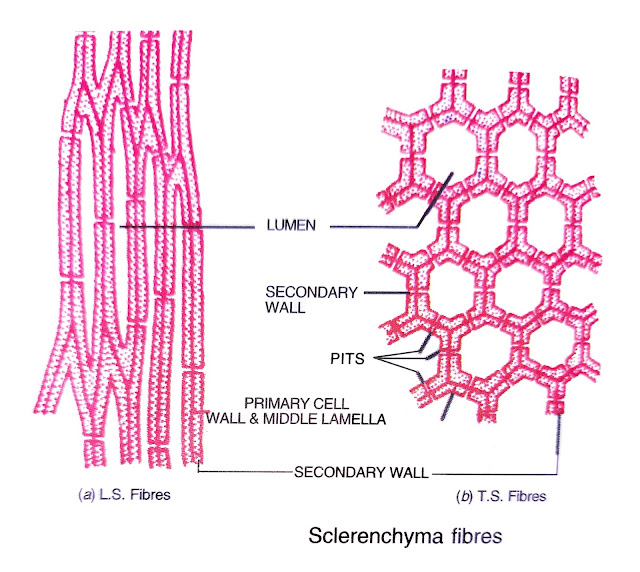 two types of plant tissues