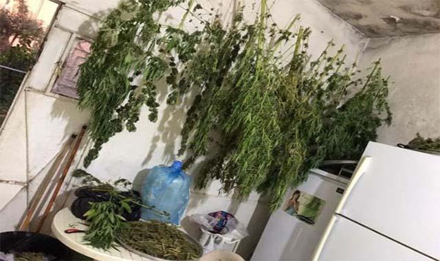 أعتقال أردنيا يمتلك  أكبر مزرعة للحشيش في السويس