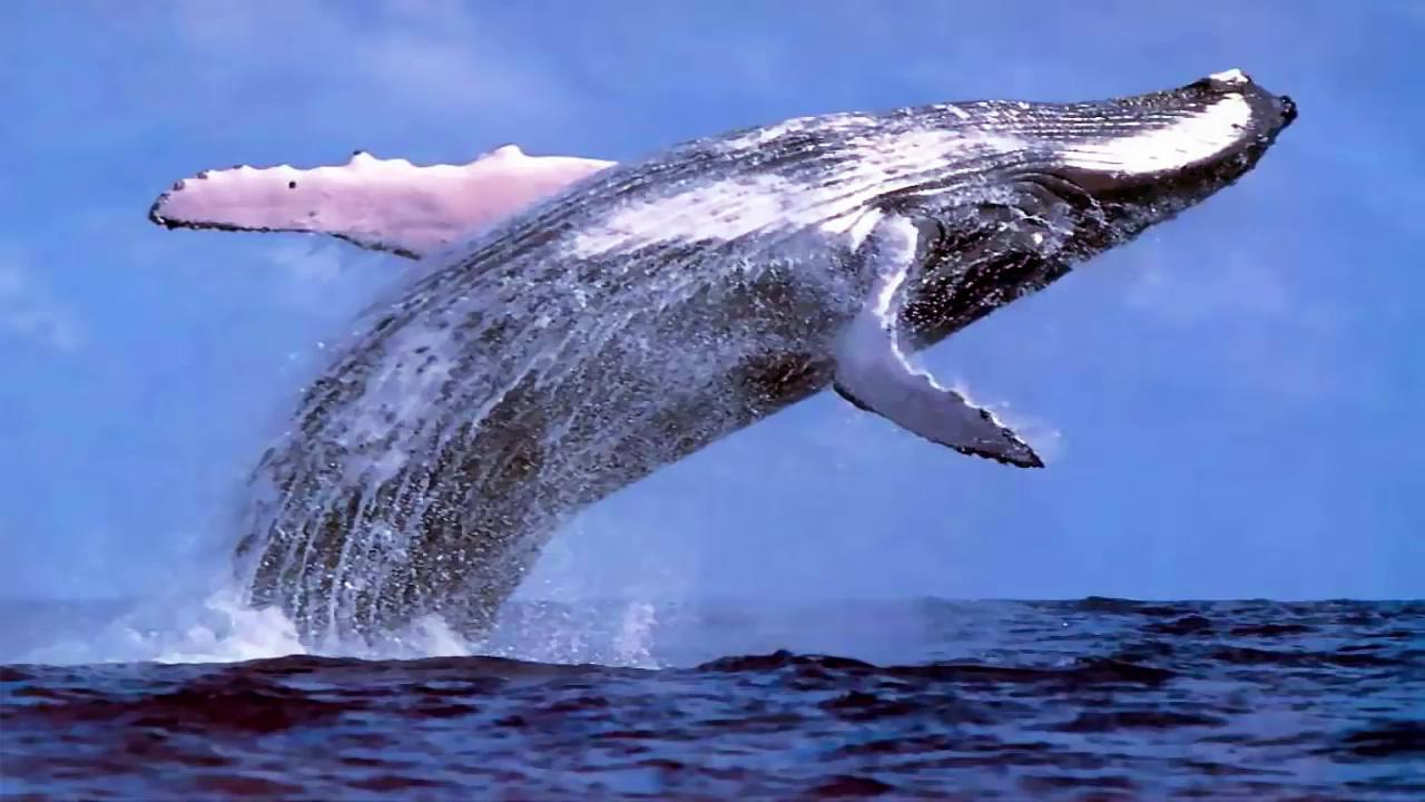 هل الحوت الذي التهم نبي الله يونس عليه السلام لازال حيا