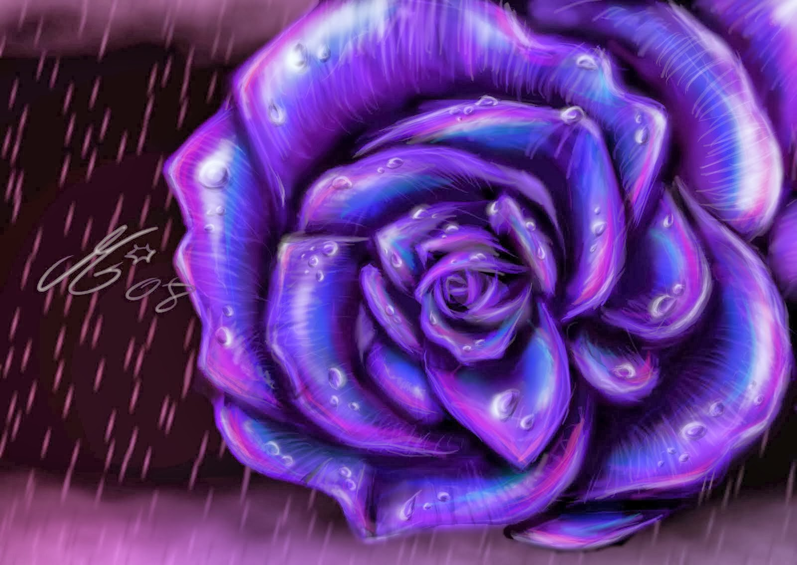 wallpapers of purple roses - photo #11