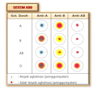 Pemeriksaan Golongan Darah