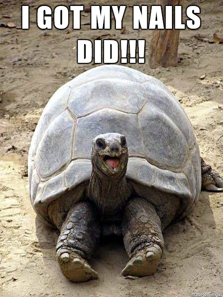 Funny Tortoise Nails Meme Picture