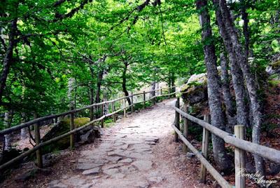 Camino de acceso a la Laguna Negra entre pinares, suelo de piedra y camino delimitado por barandas de troncos de árbol que se mimetizan con el entorno.