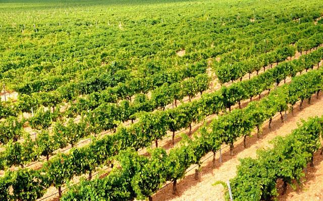 ruedawijnroute, ruedawijnroute, rueda ruta del vino, biologische wijn spanje, biologische wijn rueda, wijntoerisme castilla y leon, oenotoerisme spanje, wijntoerisme spanje, wijntoerisme rueda, verdejo, rueda, wijtoerisme rueda ruta del vino, wijntoerisme castilla y leon, oenotoerisme spanje, wijntoerisme spanje, wijntoerisme rueda, verdejo, rueda, wijtoerisme