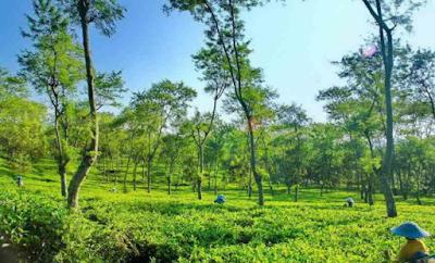 Wisata Kebun Teh Wonosari Malang dan Fasilitas, Tarif Kebun teh