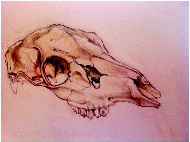 Scott Zaragoza, skull study, art