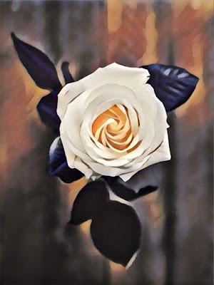 Rose Flower;